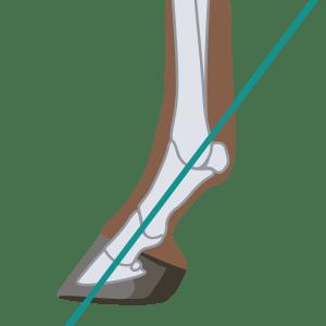 Horse Pastern angle correct