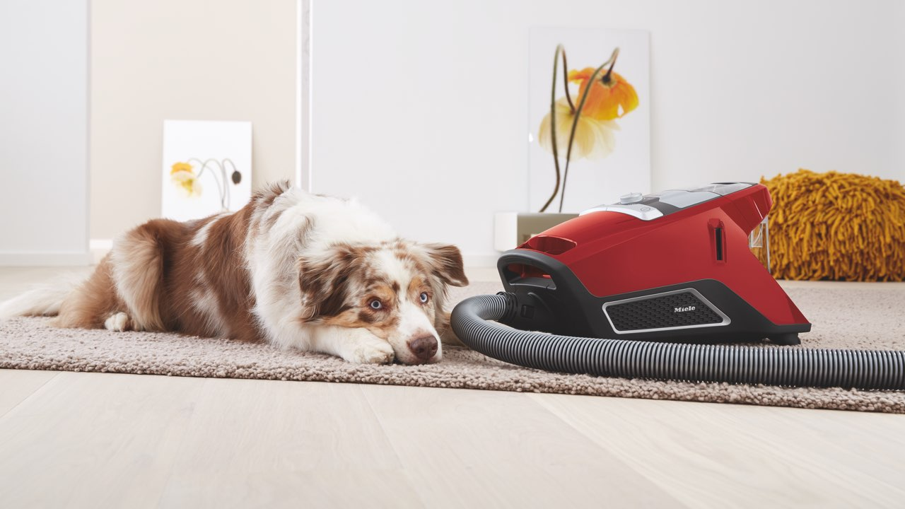 dog next to a Miele CX1 canister vacuum