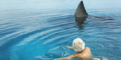 Senior man in swimming pool by model great white shark, rear view