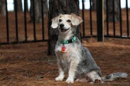 Lou (Terrier)