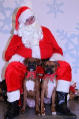 Santa and two Boxers