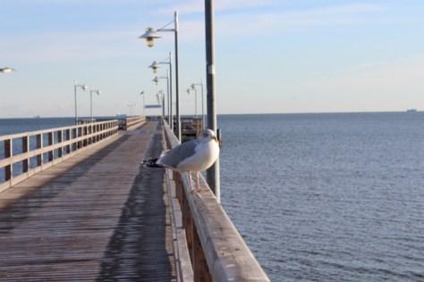 Möwe auf Seebrücke