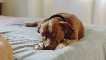 Airbnb London: Best Areas for Pet-Friendly Accommodation