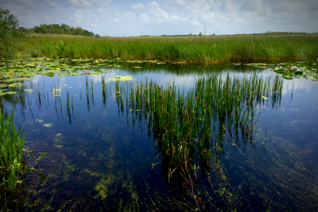 National Parks of Florida & Other Protected Areas
