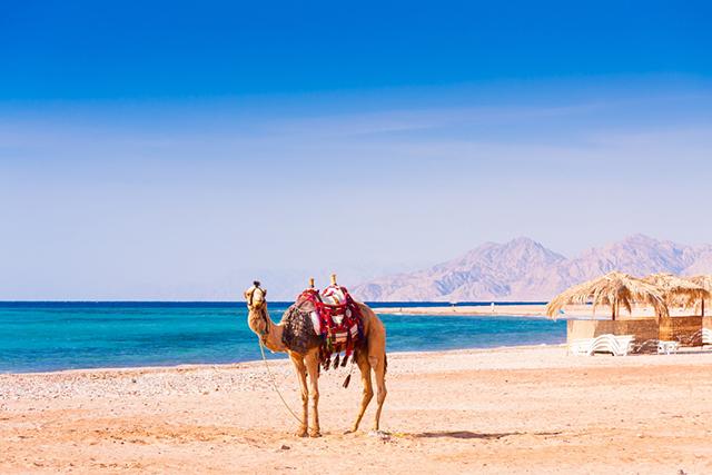 amazing beaches in egypt
