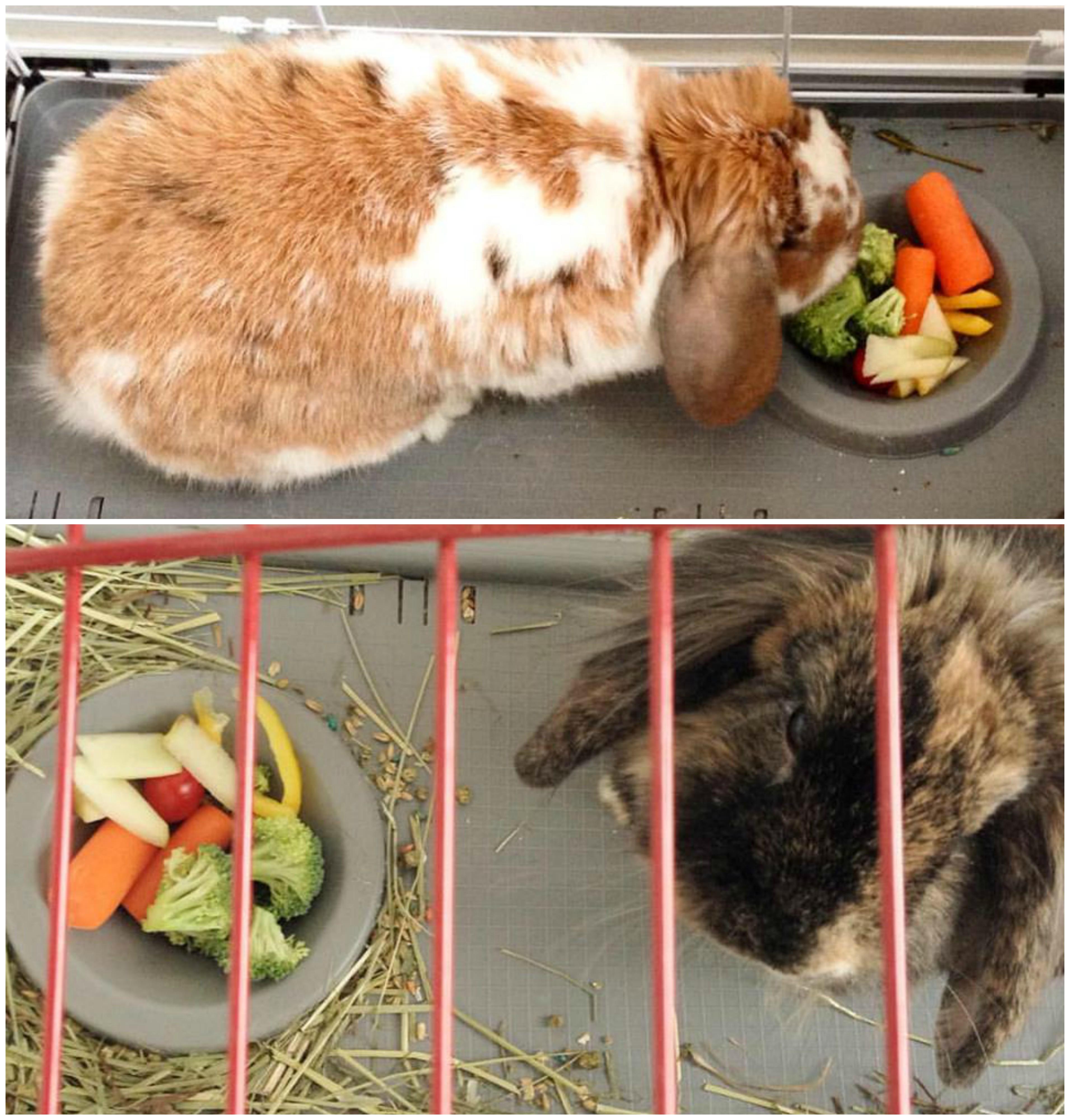 bunny_veggies