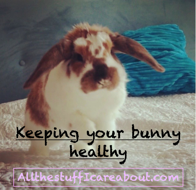 keeping_your_bunny_healthy