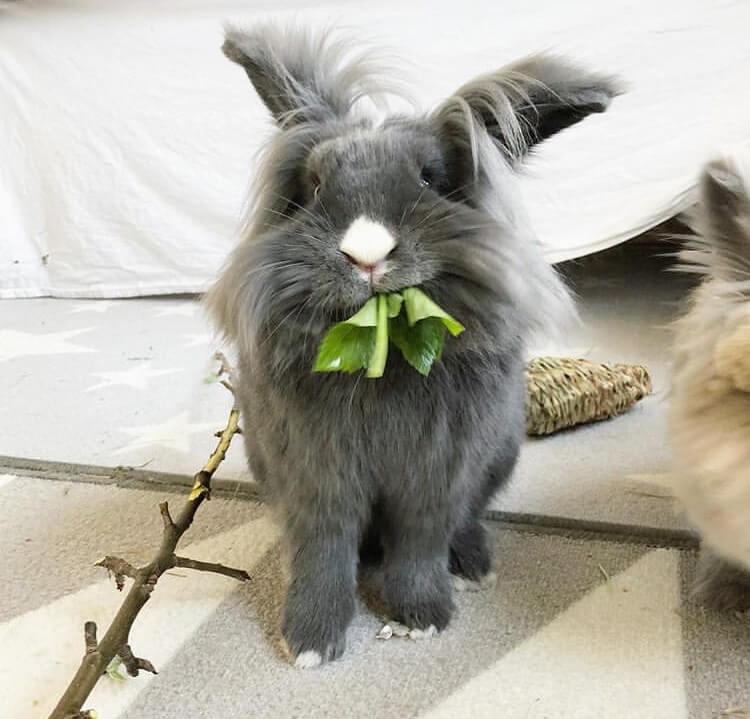 what bunnies eat