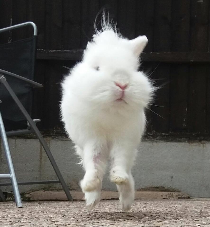 sweet bunny rabbit