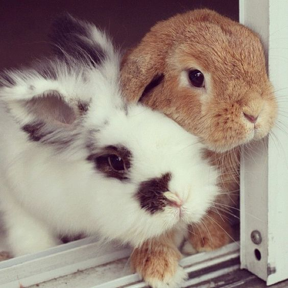 bunnies looking in one direction