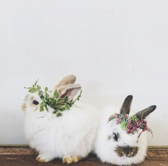 bunnies with flowers