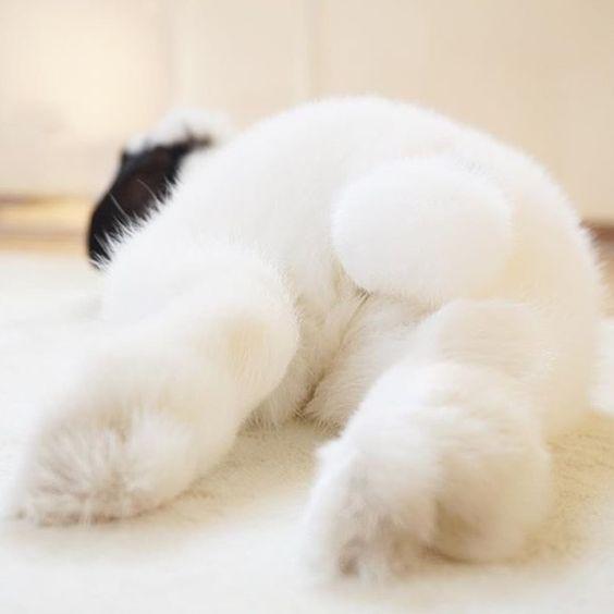 bunny fluffy butt rabbit