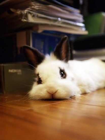 bunny looking at you