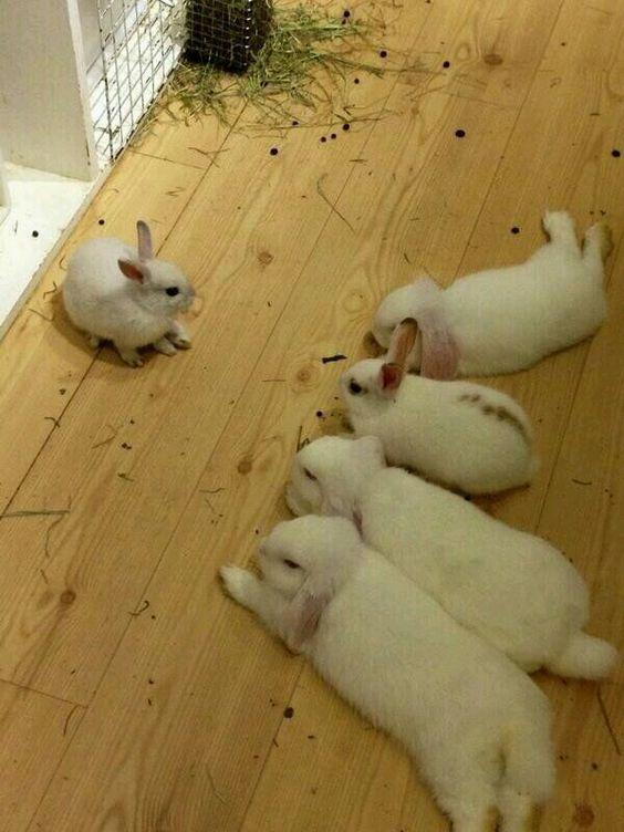 bunny meeting
