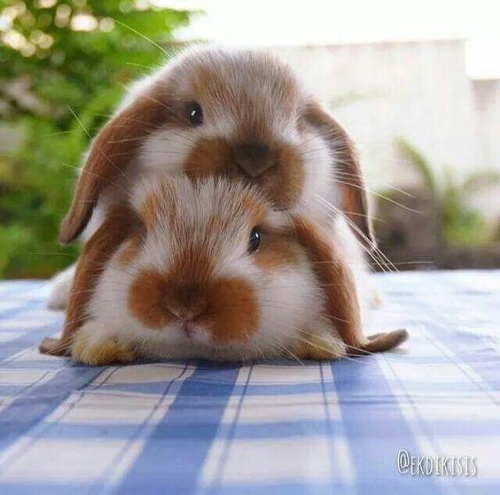 bunny on bunny