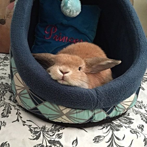 bunny resting in