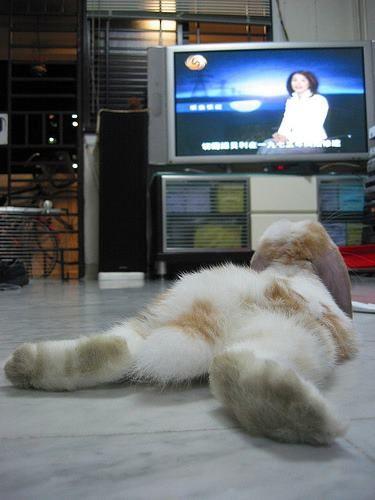 bunny rabbit watching tv
