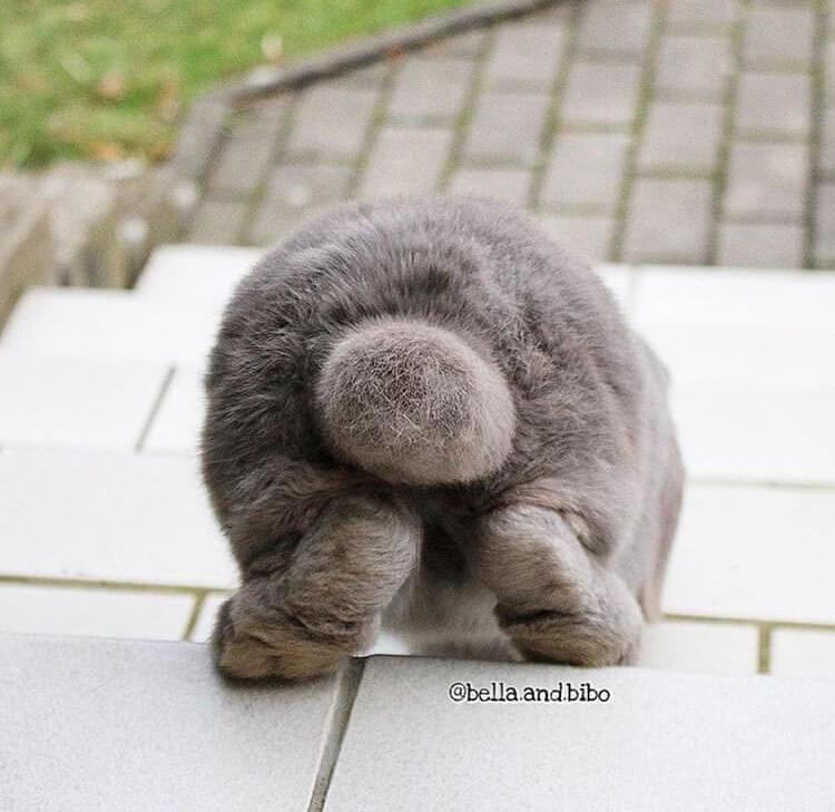 fluffy butt funny bunny pose