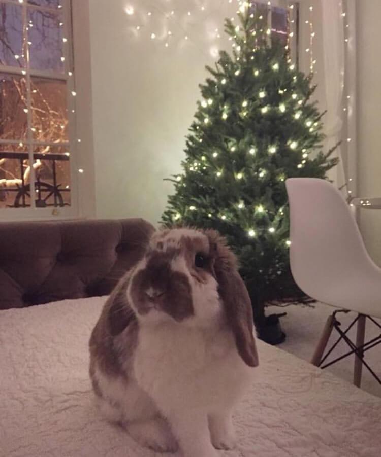 funny bunny pose christmas tree upper east side nyc bunny