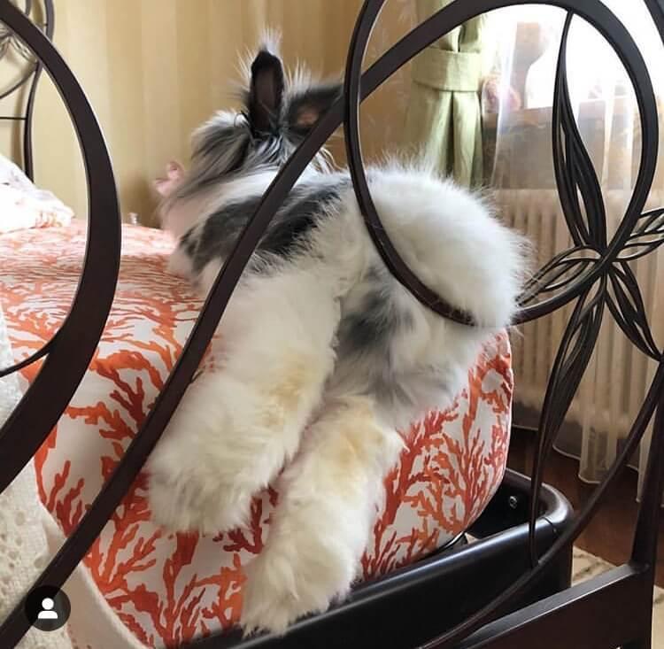funny bunny pose