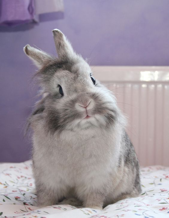 interested.bunny rabbit