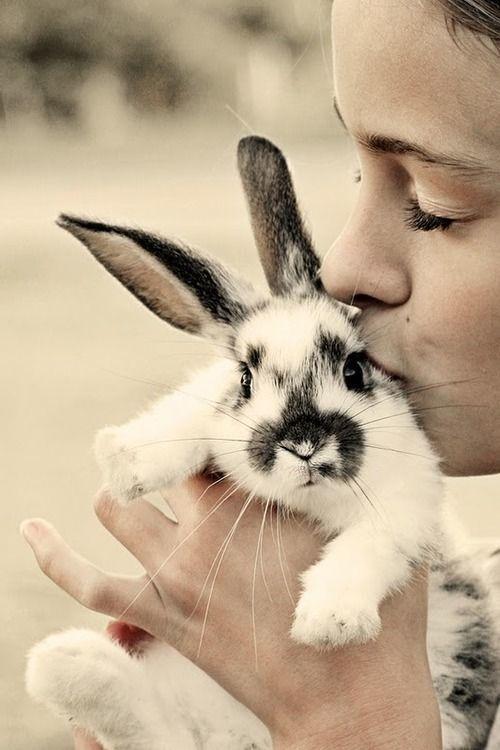 kissing bunny