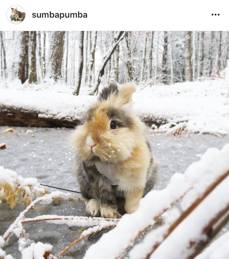 christmas_rabbit_santa_bunny_in the snow snowball