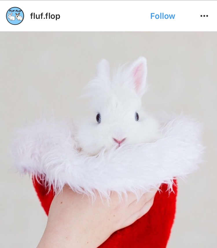 christmas_rabbit_santa_bunny_in