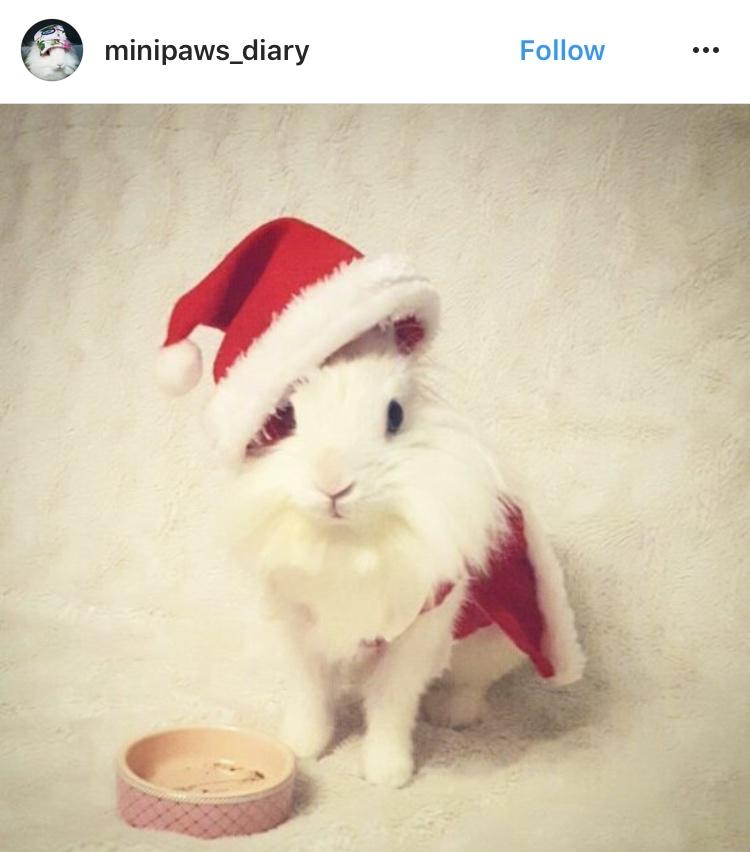christmas_rabbit_santa_bunny