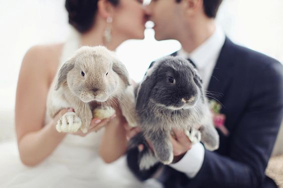 Bunny wedding theme   Bunnies   Beauty   Photoshoot   All the stuff I care  about