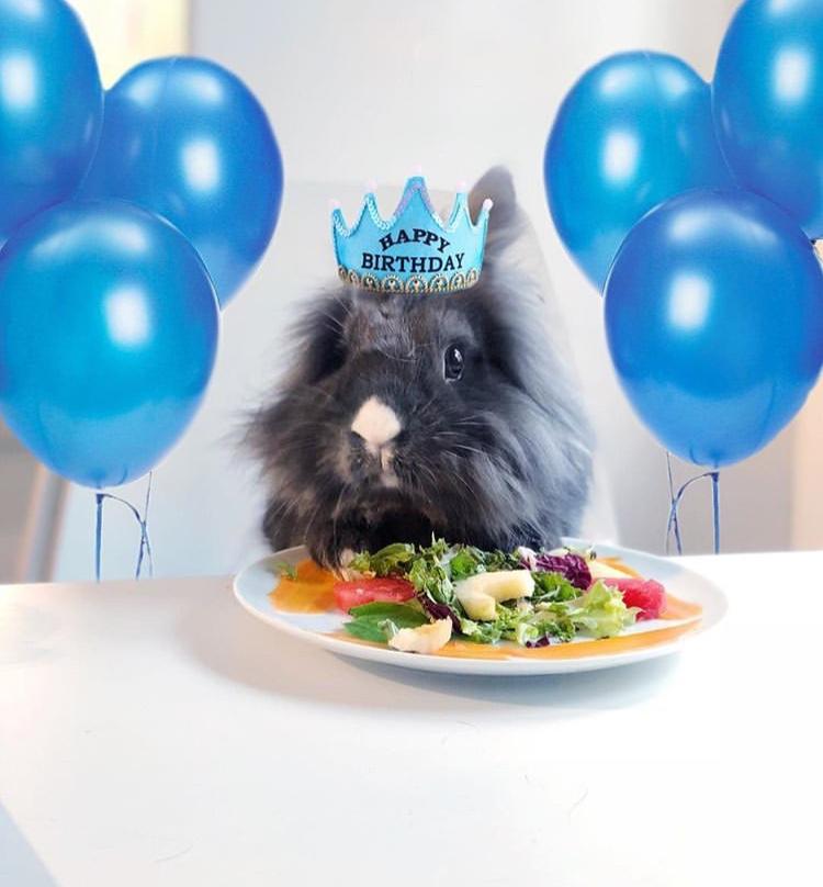bunny birthday celebration