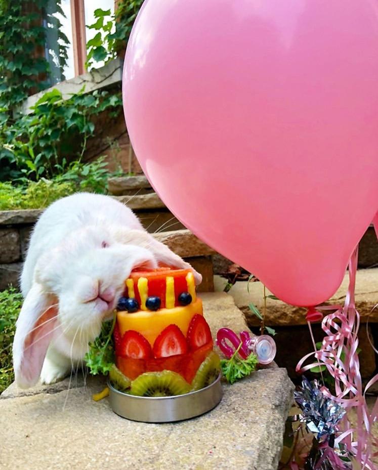 funny bunny pose birthday cake