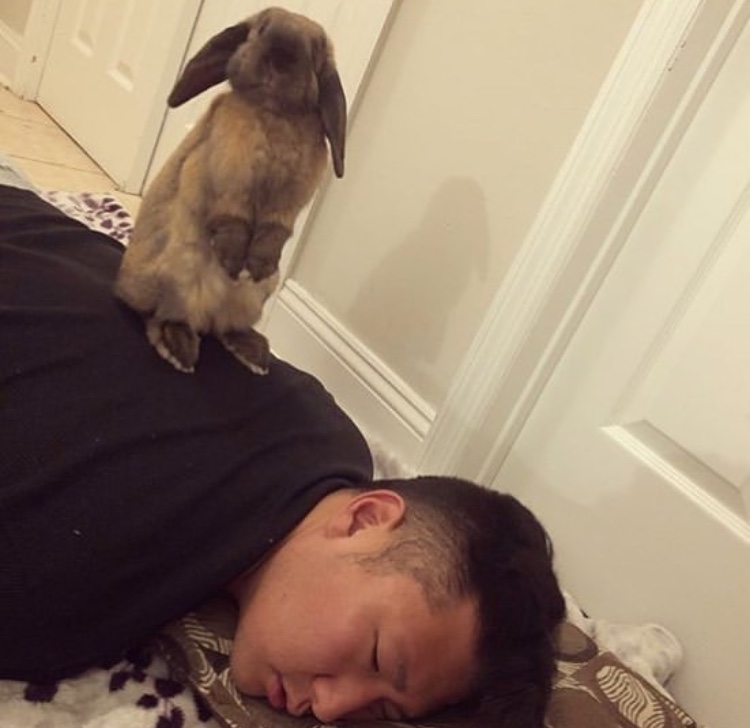 funny bunny pose on human