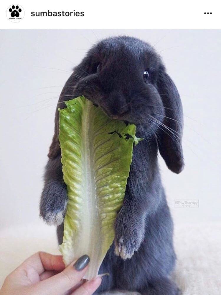 you could be surprised what to expect from living with a bunny