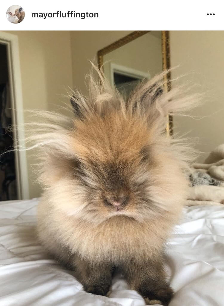 living with a bunny bed hair day