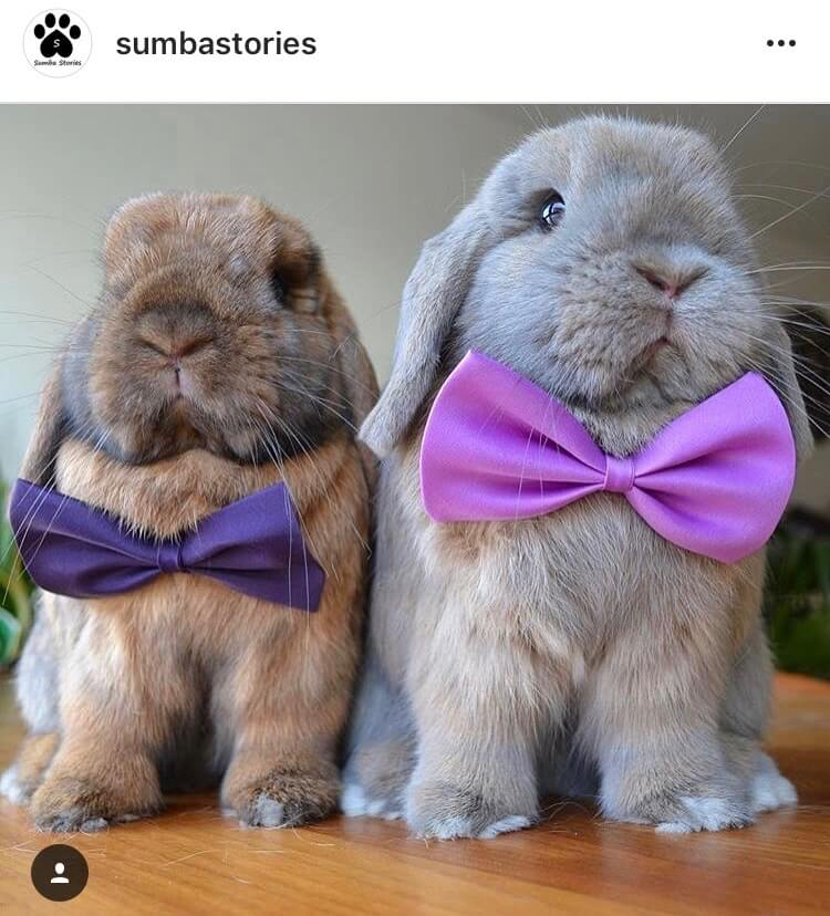 living with a bunny wedding invitation
