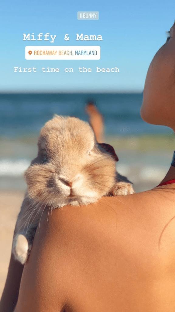bunny mum bunny mama miffy bunny mummy allthestufficareabout