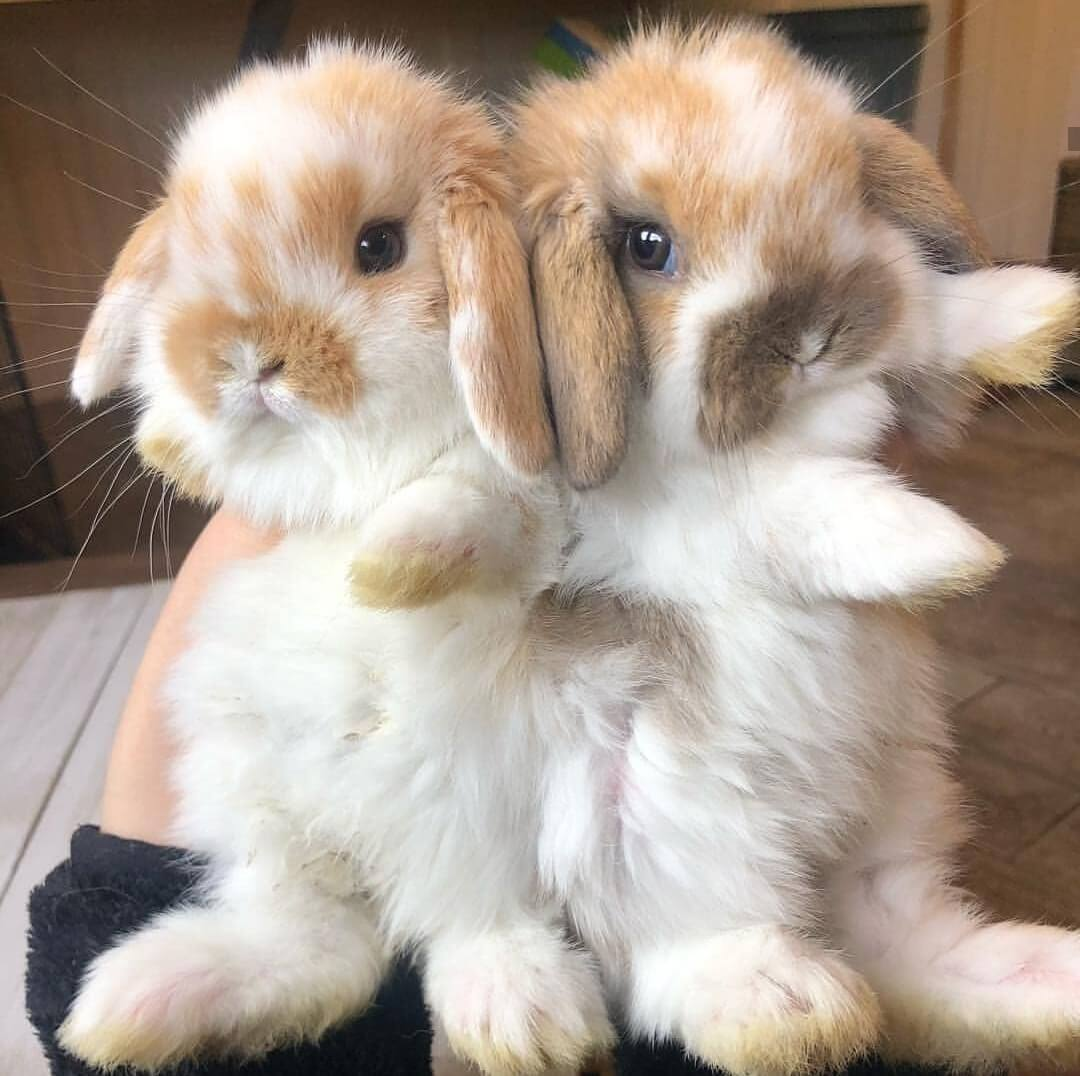 cute bunny pictures funny bunny images bunny pics allthestufficareabout
