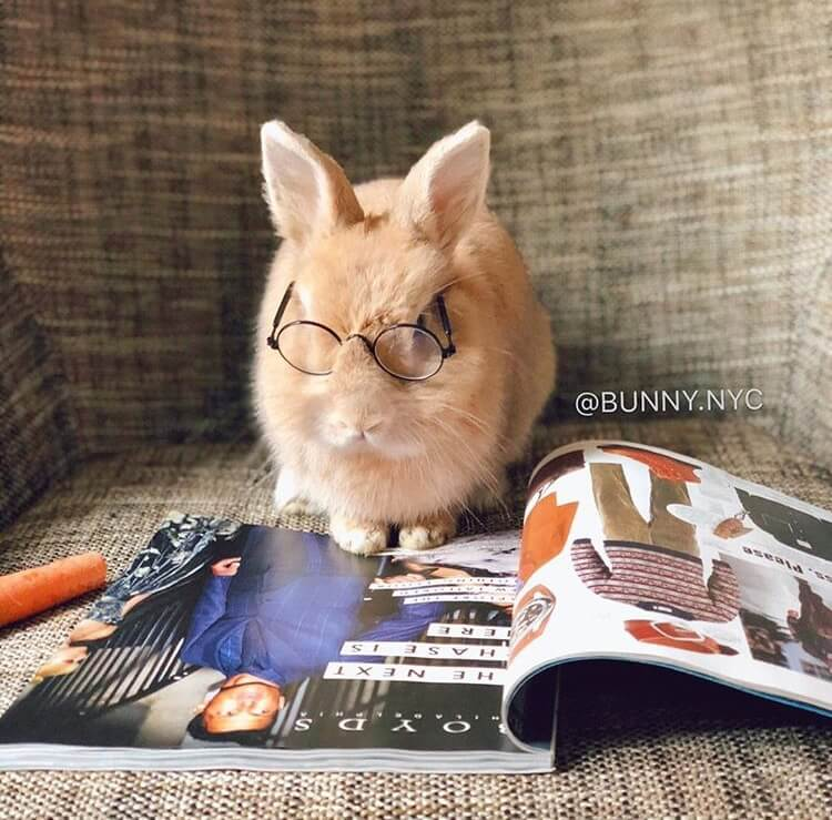 cute bunny pictures funny bunny images bunny pics