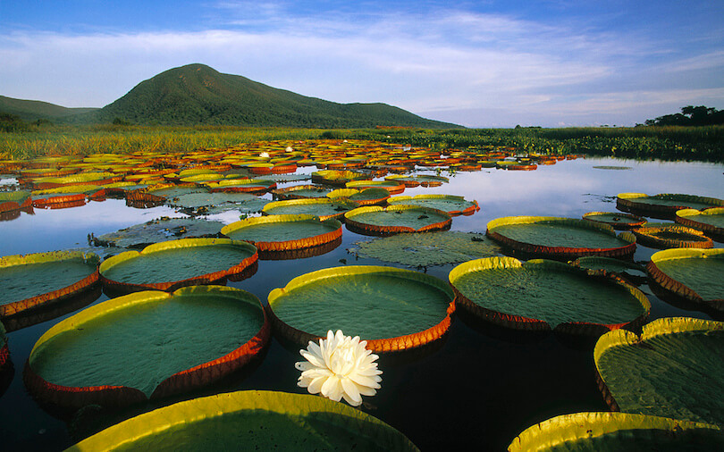 pantanal what to see in brazil