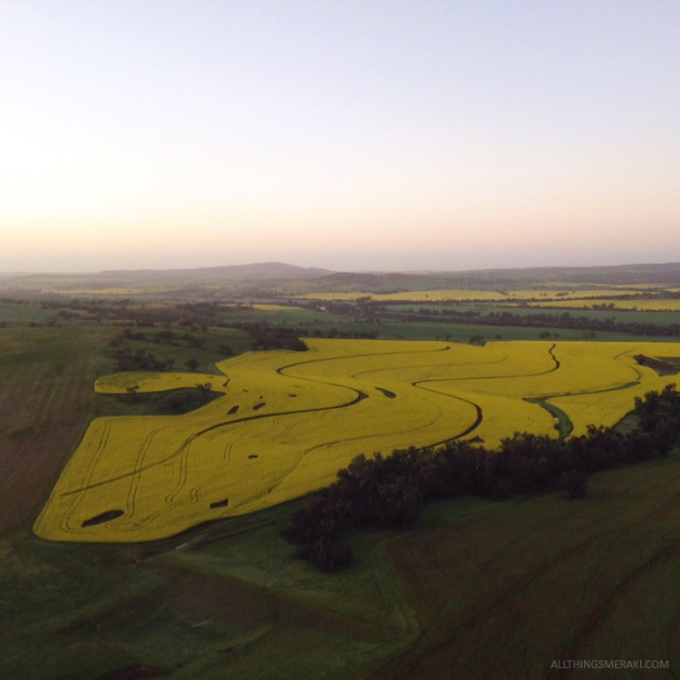 Canola Crops From Above