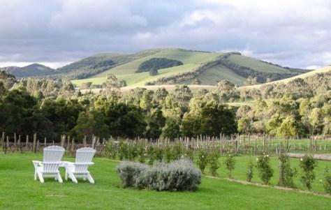 Waratah Wine & hills 1