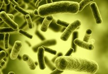 Photo of Top Ten Most Dangerous Bacteria on Earth