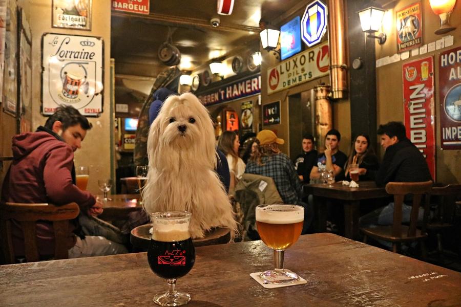 Pivo en el interior de la cervecería Delirium café, el bar más famoso de Bruselas. Bélgica