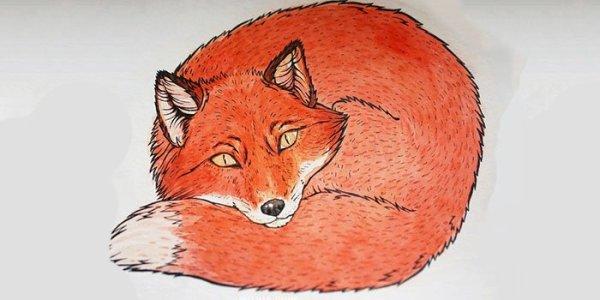 Как нарисовать лису карандашом поэтапно: фото, видео для детей