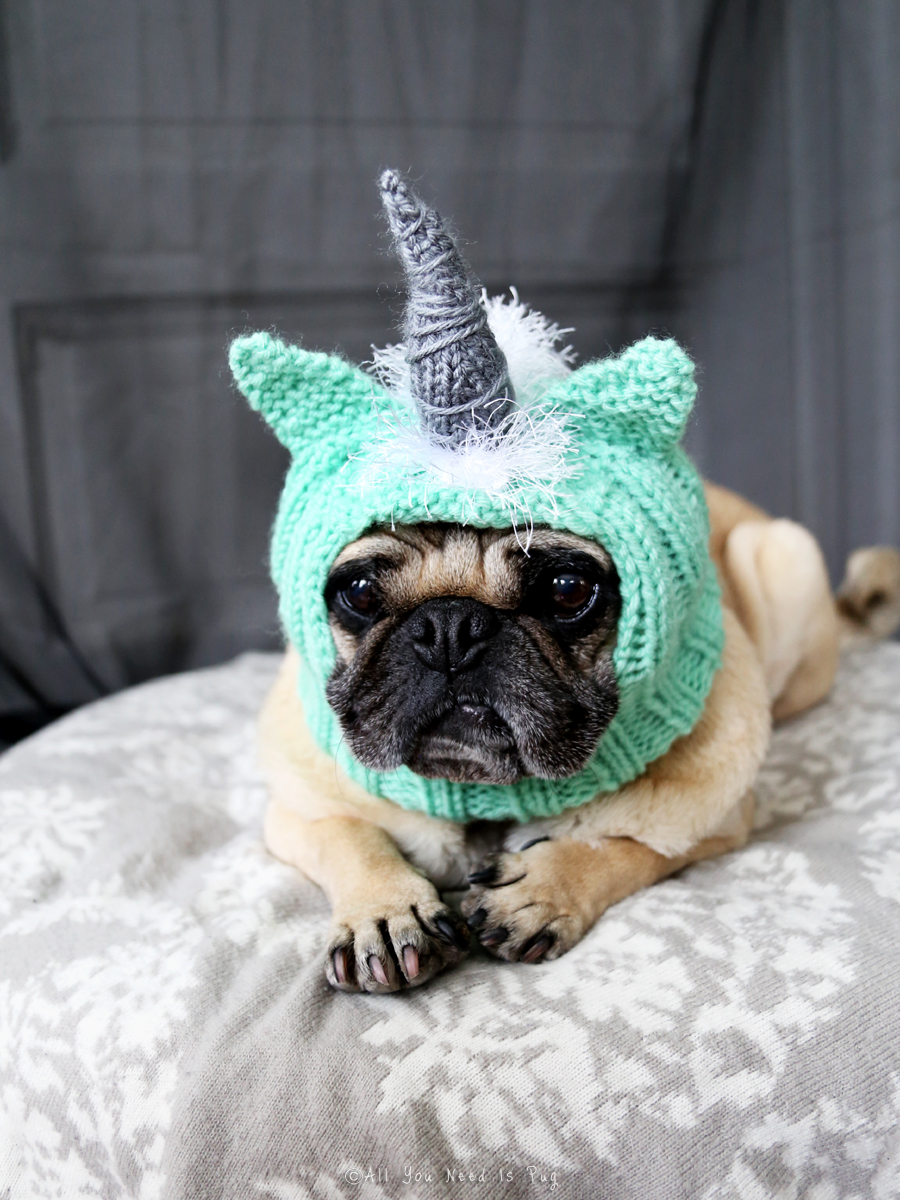 A Note On Fall Amp Halloween Dog Hat Orders All You Need