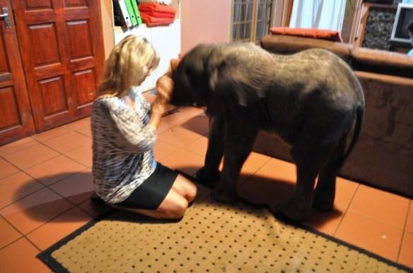 Baby elephant snack