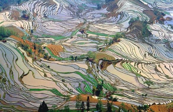 Terrace-rice-fields-in-Yunnan-Province