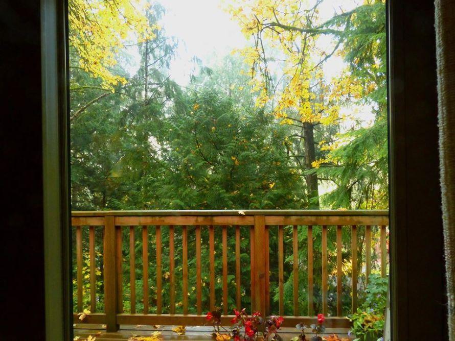 Fall in Washington photo