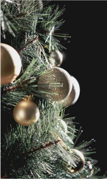 Christmas tree photo by Alisha Williams